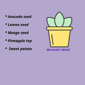 List of scraps that can grow as houseplants (avocado,lemon seed, mango seed,pineapple top)